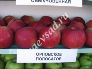 orlovskoe-polosatoe