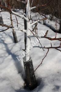 Побелка и пластиковая сетка на дереве