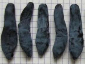 Жимолость сорт Загогулинка