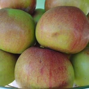 Сорт яблони Ветеран