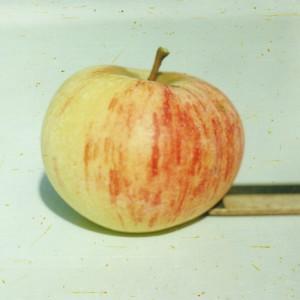 Сорт яблони Коричное полосатое (Коричное, Коричневое)