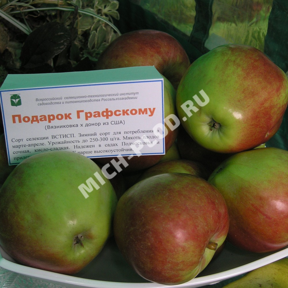 Яблоко подарок графскому 1